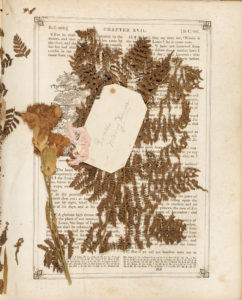 Page from Saunders Burdick Family Bible with pressed carnation and fern and tag Grace Merry Xmas
